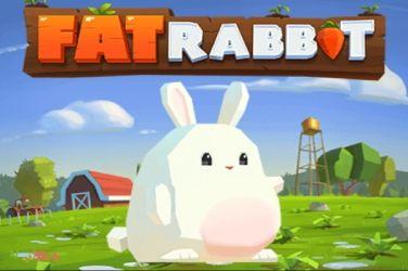 fat-rabbit